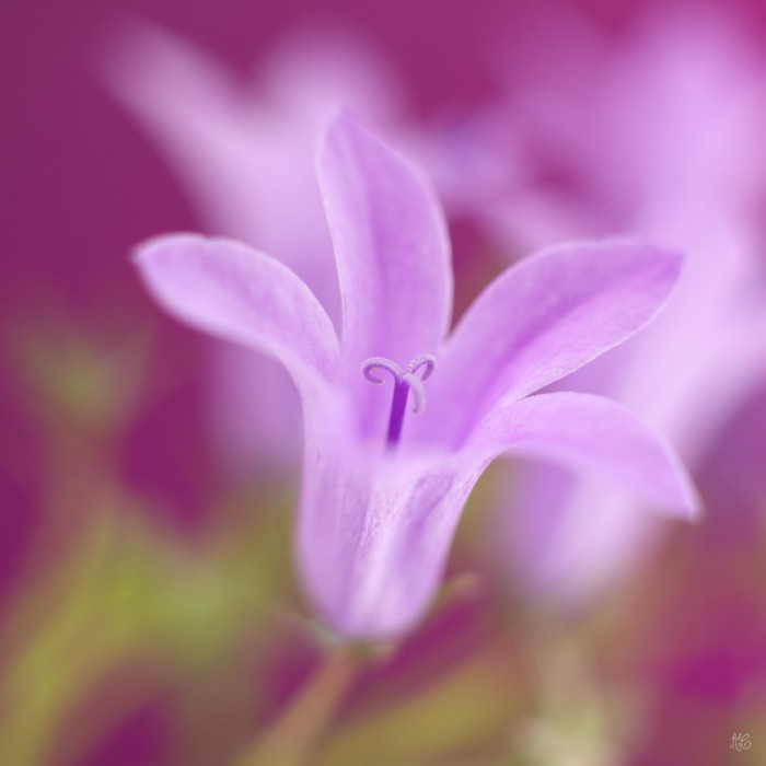 Photos De Fleurs en macro -   Finesse